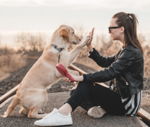 How to Play With Your Dog for Enjoyment, Bonding and Rehabilitation. A (Zoom) Online 4-Week Class